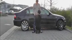 Public fist fucking and cock sucking brunette babe